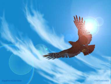 Wallpaper - Soaring Hawk against the Sky